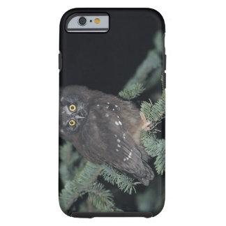 Boreal Owl on Branch Tough iPhone 6 Case