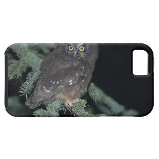 Boreal Owl on Branch iPhone 5 Case