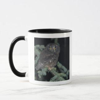 Boreal Owl on Branch Mug
