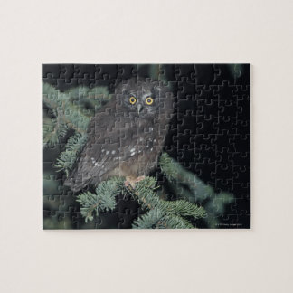 Boreal Owl on Branch Puzzle