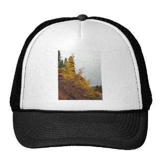 boreas pass aspens trucker hat