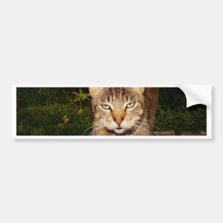 Bored Kitty Cat Bumper Stickers