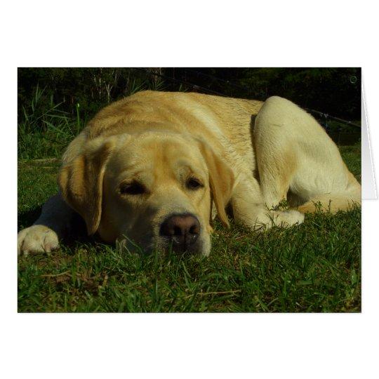 Boredom - Labrador in green grass Card