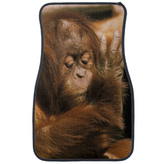Borneo. Captive orangutan, or pongo pygmaeus. Car Mat