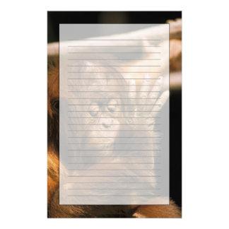 Borneo. Captive orangutan, or pongo pygmaeus. Stationery