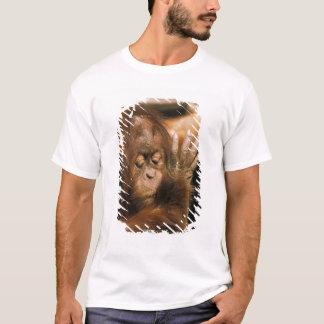 Borneo. Captive orangutan, or pongo pygmaeus. T-Shirt