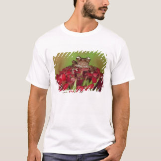 Borneo. Close-up of Cinnamon Tree Frog on red T-Shirt