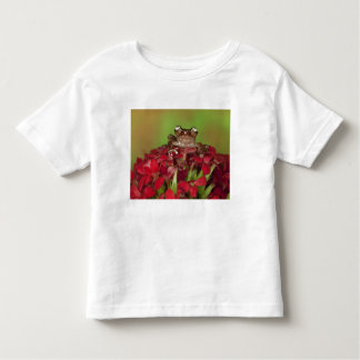 Borneo. Close-up of Cinnamon Tree Frog on red Toddler T-Shirt