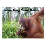 Borneo Orangutan Adventure Travel Post Cards