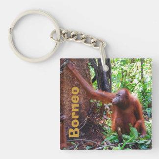 Borneo Orangutan Single-Sided Square Acrylic Key Ring