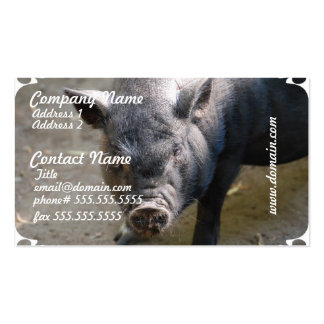 Borneo Pig Pack Of Standard Business Cards