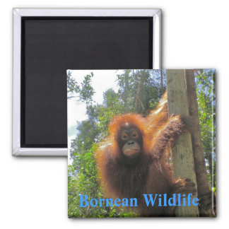 Borneo  Wildlife Square Magnet