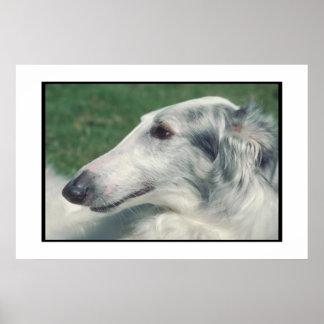 Borzoi Dog Poster