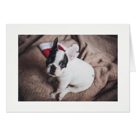 Boston Bull at Christmas time Card