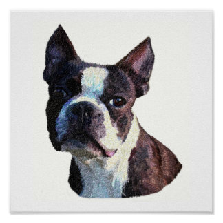 Boston Bull Terrier Posters and Prints