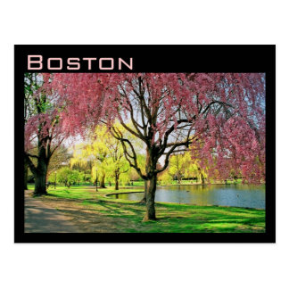 Boston Common Postcard