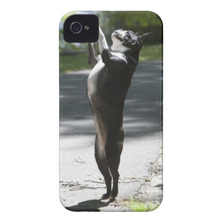 Boston Terrier 2 iPhone 4 Covers
