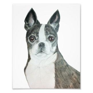 Boston Terrier 8 x 10 Print Photographic Print