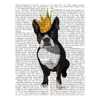 Boston Terrier And Crown Postcard