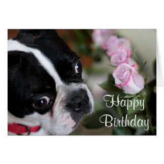 Boston terrier and flowers card