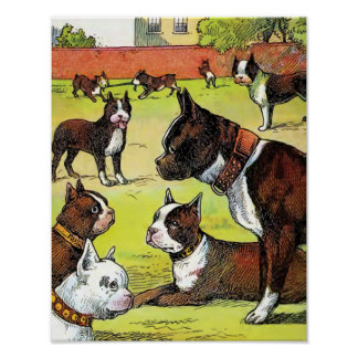 Boston Terrier and Puppies Vintage Illustration Poster