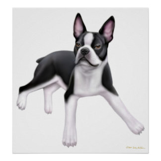 Boston Terrier Buddy Print