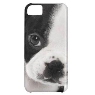 Boston Terrier iPhone 5C Cover