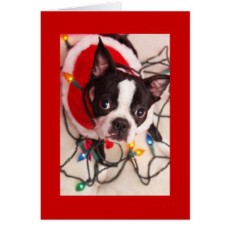 Boston Terrier Christmas Lights Santa Greeting Car Card