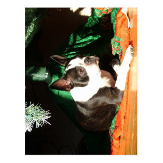 Boston Terrier Christmas with Piper Postcards