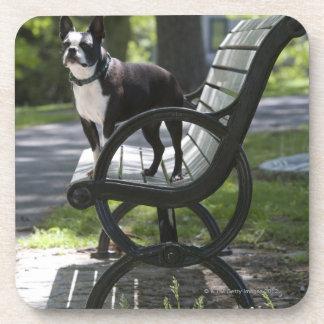 Boston Terrier Coasters