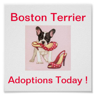 Boston Terrier Dog Adoptions Today Sign