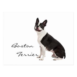 Boston Terrier dog beautiful photo custom postcard