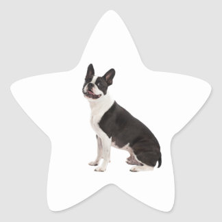 Boston Terrier dog beautiful photo stickers, gift Star Sticker