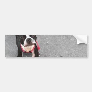 Boston Terrier Dog Bumper Sticker