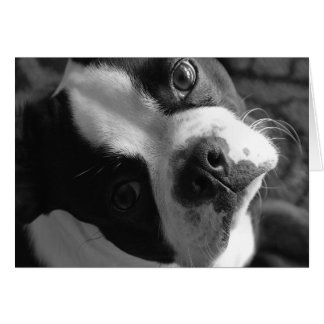 Boston Terrier Dog Card