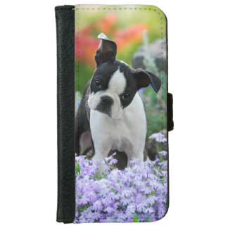 Boston Terrier Dog Cute Puppy, protective iPhone 6 Wallet Case