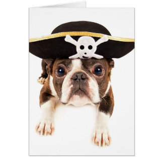 Boston Terrier Dog Dressed As A Pirate Card