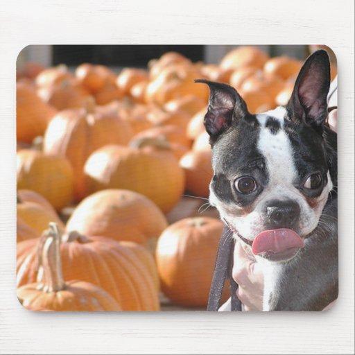 Boston Terrier Dog in Pumpkin Patch Mousepad