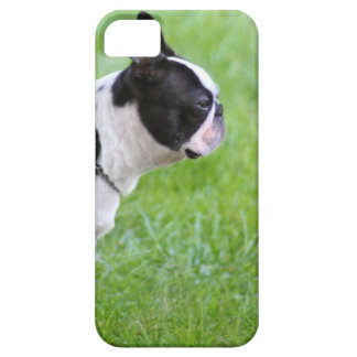 Boston terrier dog iPhone 5 cover