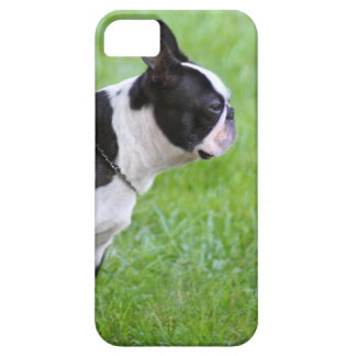 Boston terrier dog iPhone 5 covers