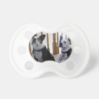 Boston Terrier dog Pacifiers