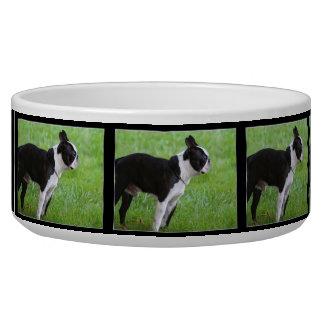 Boston Terrier dog Pet Bowls