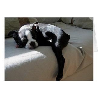Boston Terrier Dog Portrait Blank Greeting Card
