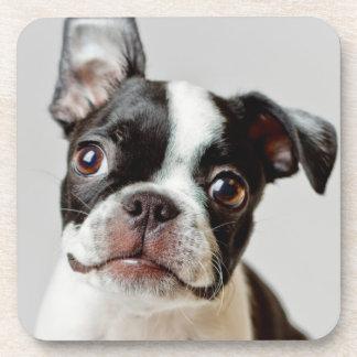 Boston Terrier dog puppy. Drink Coasters