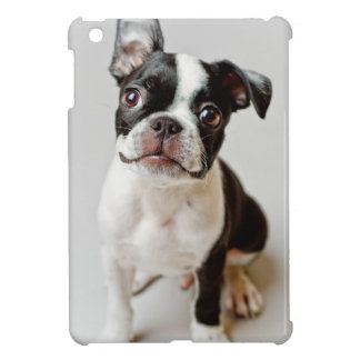 Boston Terrier dog puppy. iPad Mini Cover