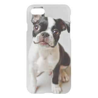 Boston Terrier dog puppy. iPhone 8/7 Case