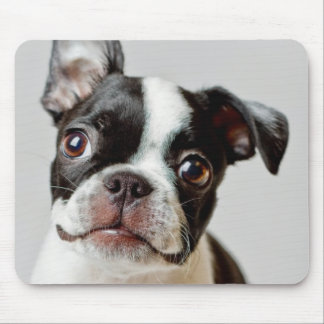Boston Terrier dog puppy. Mouse Mat