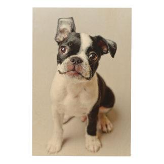 Boston Terrier dog puppy. Wood Canvas