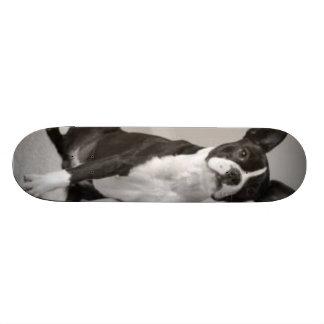 Boston Terrier Dog Skateboard
