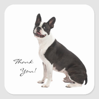 Boston Terrier dog thank you custom stickers